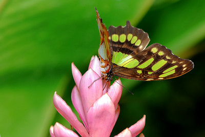 Butterflies Photos