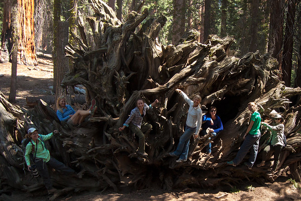 Sequoia ReWilding - Lori