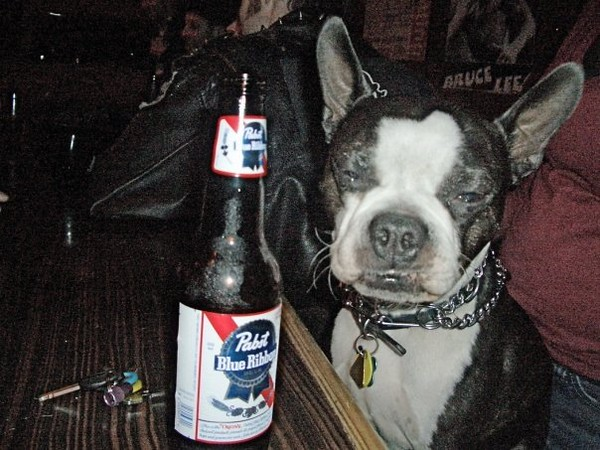 Wags Wasted.JPG