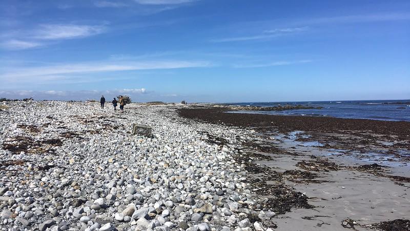 wandering the Hawk, Cape Sable Island, NS