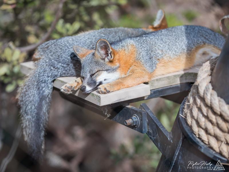 Santa Barbara Zoo 10-13-2018-101.jpg