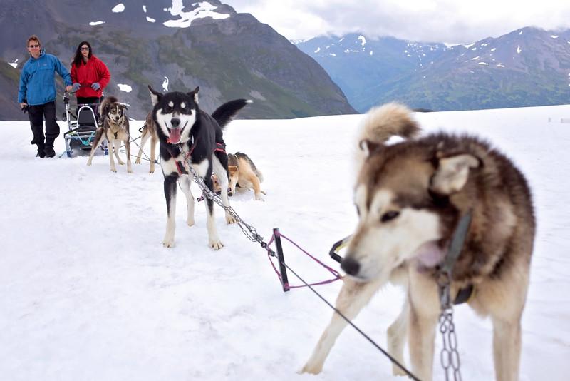 DogSledding8-8-2.jpg