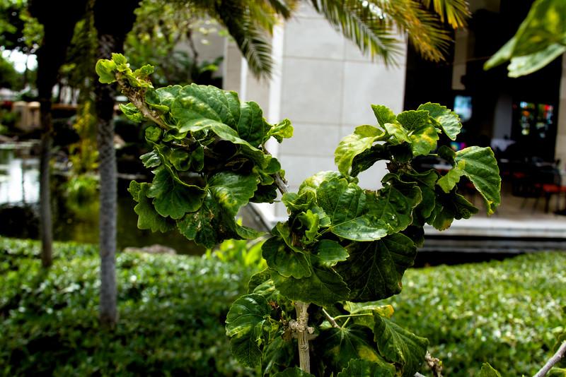 Journey into Oahu Photograph 10