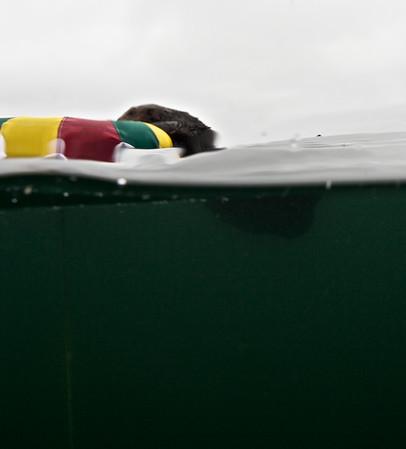 Monterey freediving