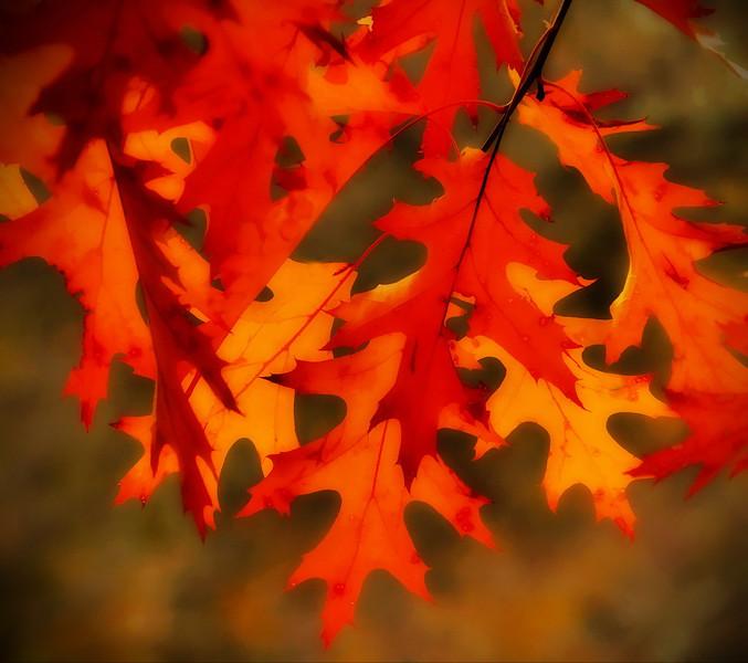 Bob Walling - Oak Leaves.jpg