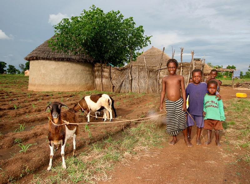 Herding goats in northern Ghana.