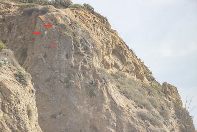 2021 Peregrine Falcon Nest Headlands Location