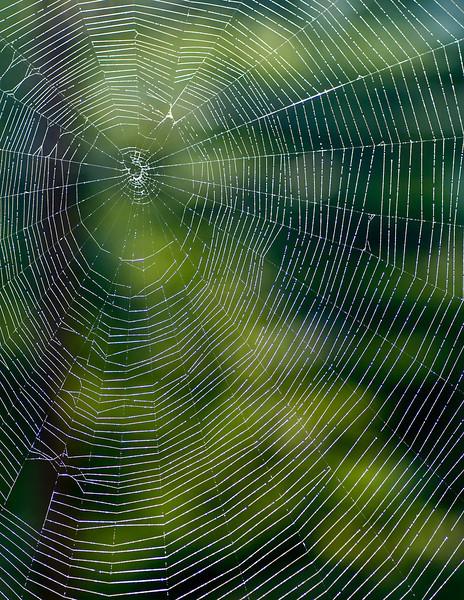 9-19 Spider Web-2