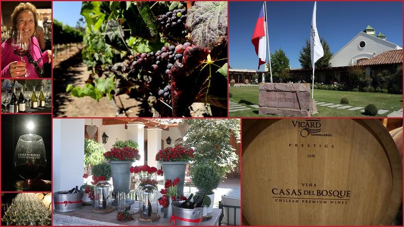 Casas Del Bosque Vineyard & Winery in the Casablance Valley