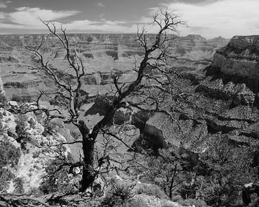 Black and White: Arizona