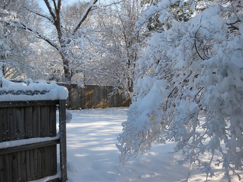 Snow in Jackson_20090301_007.JPG
