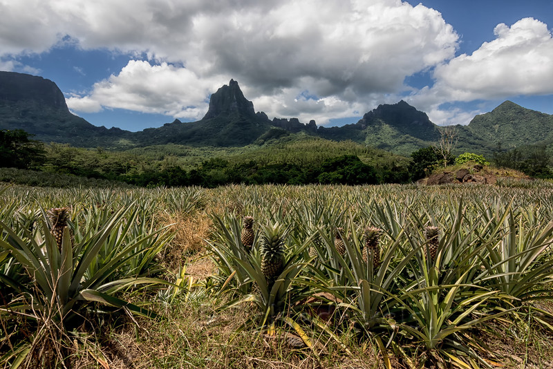 Mt. Tohiea watching over the Pineapple Field