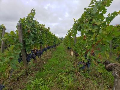 St Emilion, France - Wine Region