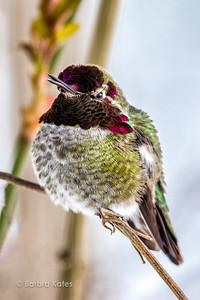 GARDEN SNOW BIRDS