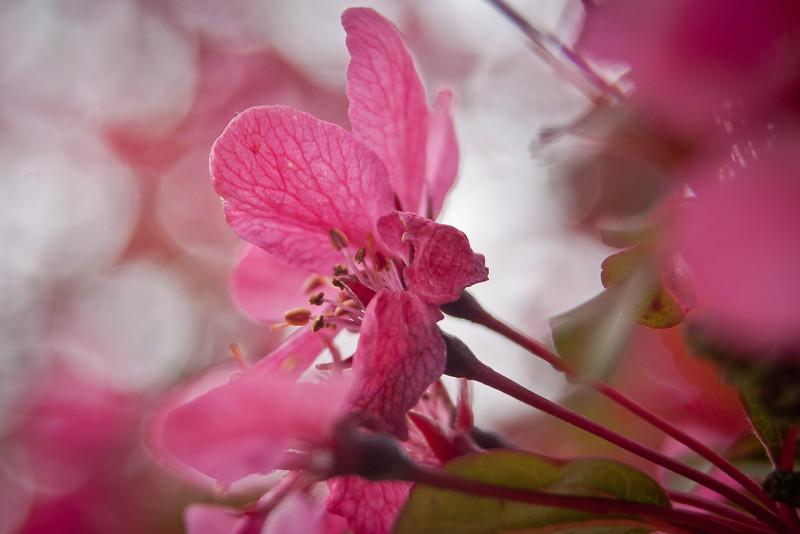 Kubota Gardens 001.jpg