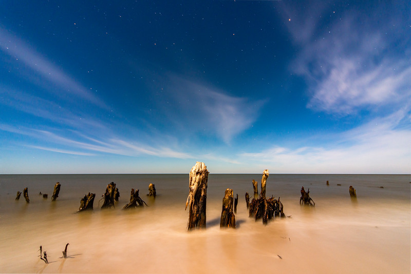 Cape San Blas Stumps under Moon