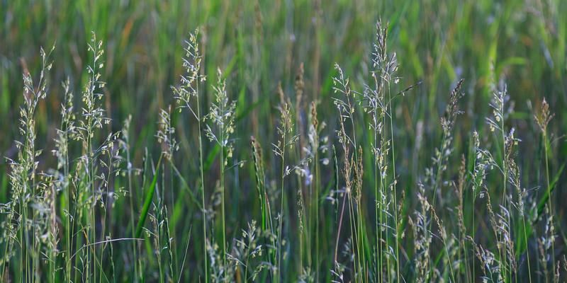 Campsite Grass