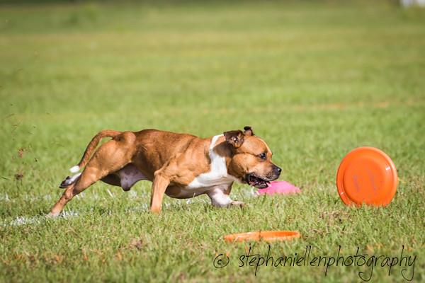 _MG_2575Up_dog_International_2016_StephaniellenPhotography.jpg