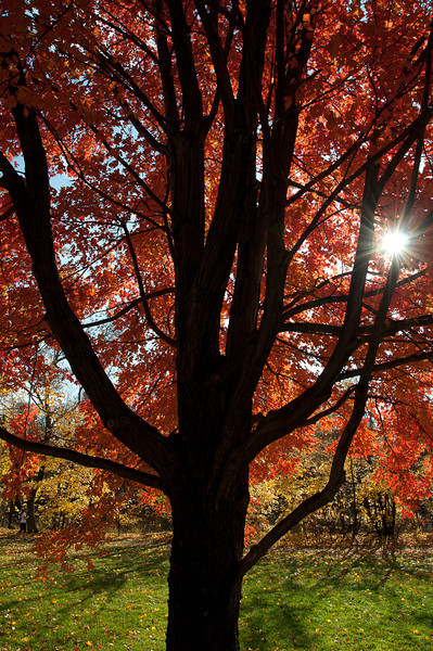 fall25.jpg