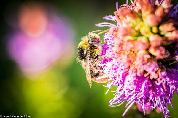 1907 Bezige Bijen
