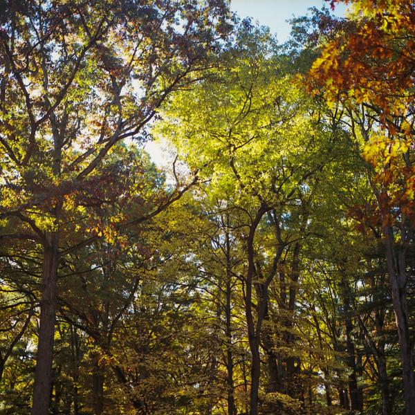 Autumn Hike 120 Film-00013.jpg