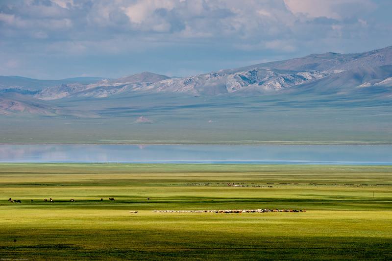 Mongolsko (176 of 496).jpg