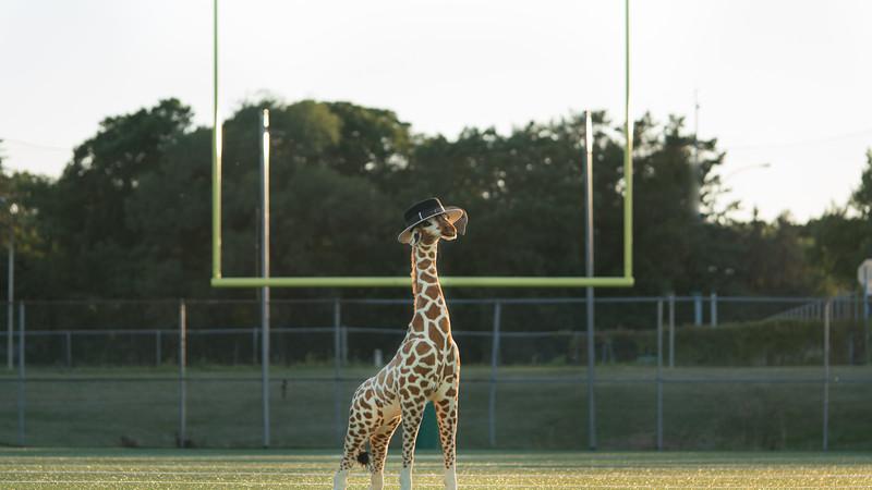 Giraffe-3107.jpg