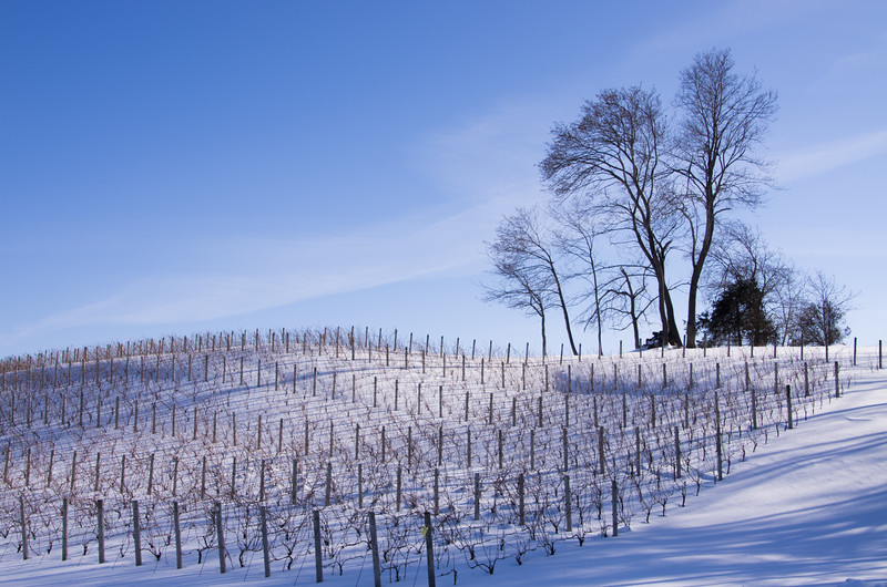 Vineyard on the way home.