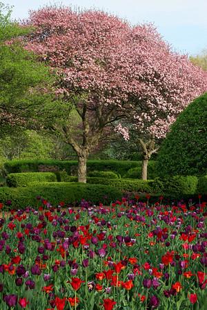 Illinois Florals