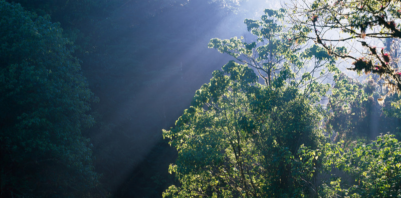 El Triunfo Biosphere Reserve, Chiapas, MEX / Rays of light streaming through the fog in dense cloud forest canopy.  408P2