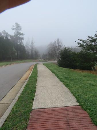 2020 04 walk park 3