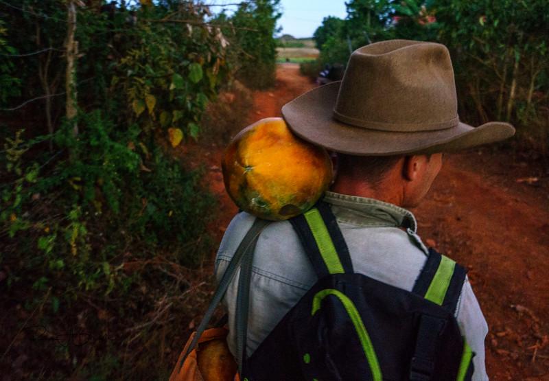 Vinales Man Papaya.jpg