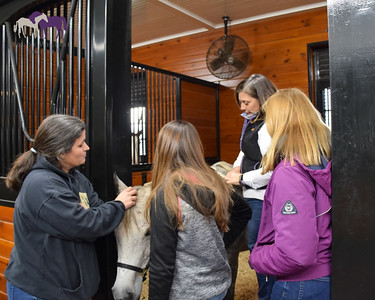 Winter Workshop: Grooming for Top Turnout