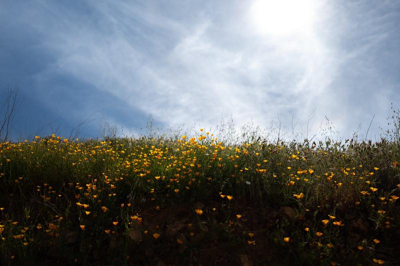 Spring Flowers A-30.jpg