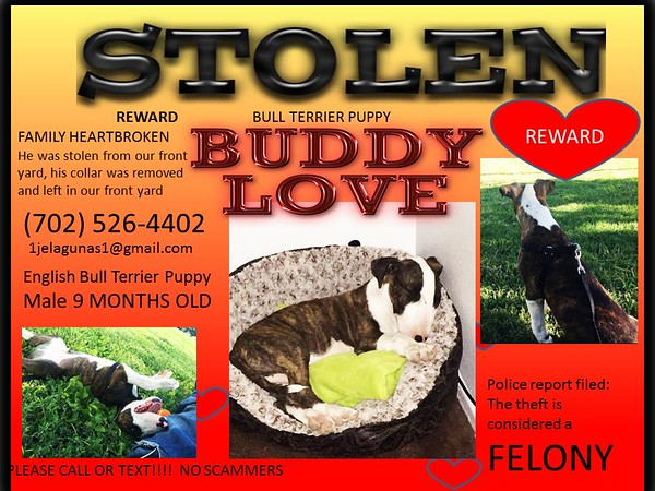 Custom Graphics for Lost Stolen Pets