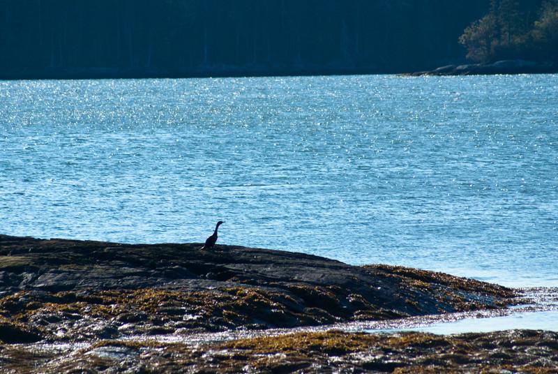 Maine Vacation-02892.jpg