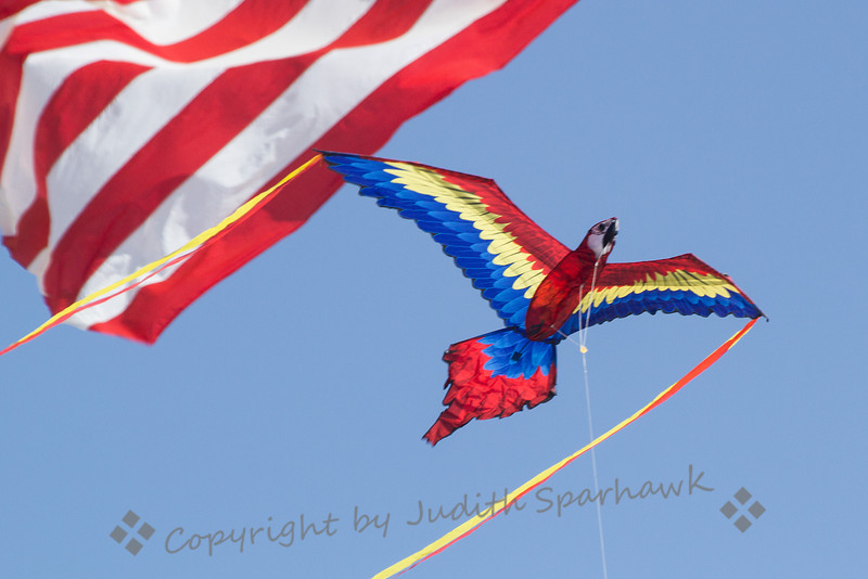 Parrot & Stripes ~ Kite festival, Huntington Beach, CA