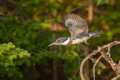 Aug. 22, 2021 - Birds in Flight
