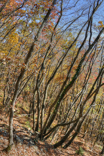Wood - Castelnovo ne' Monti, Reggio Emilia, Italy - November 13, 2011