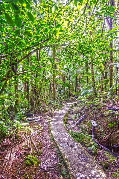 El Yunque Rain Forest/Puerto Rico - Feb., 2016