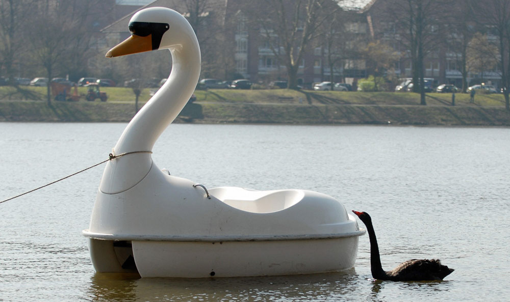 . Black swan Petra swims behind a swan shaped pedal boat 28 March 2007 on the Aasee lake in Muenster, northwestern Germany. Petra fell in love with the pedal boat already in spring 2006, never left its side and even spent the winter time with the boat at Muenster\'s zoo. Both were brought now back to the Aasee, where the romance began.     AFP PHOTO    DDP/MICHAEL GOTTSCHALK