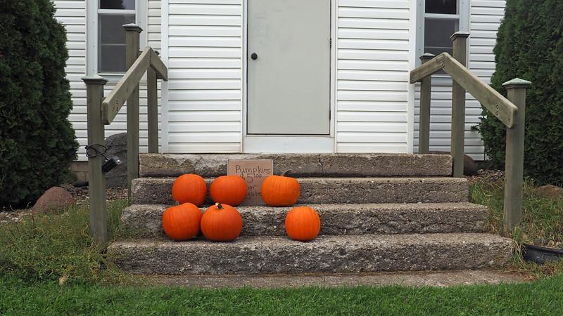 Pumpkins on the doorstep of Merton Town Hall