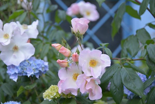 The Wonderful World of Flowers