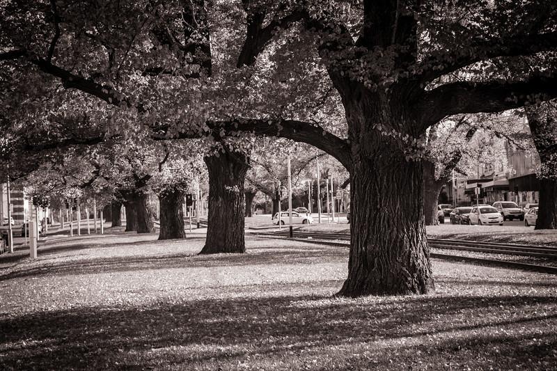 Trees-1.jpg