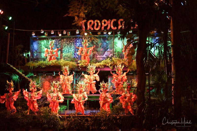 20120226_tropicana_nex7_6327.jpg