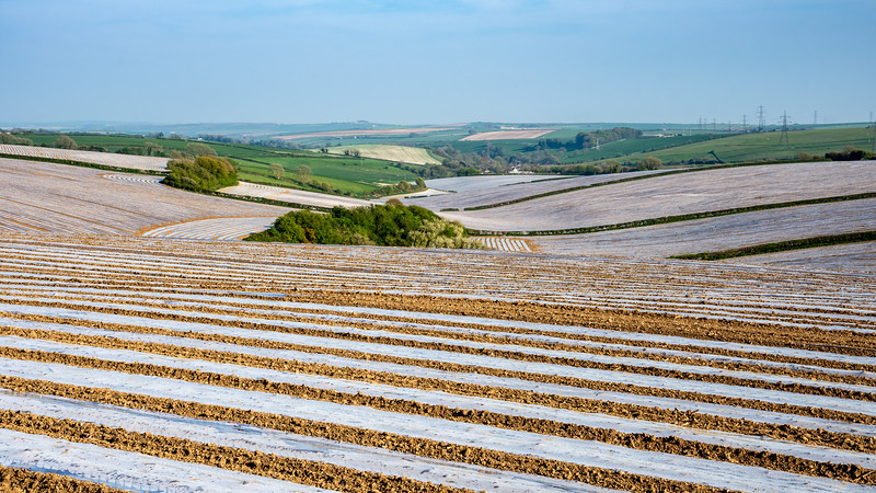 Plastic mulch on Dorset fields