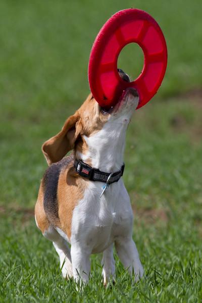 Flip the Frisbee