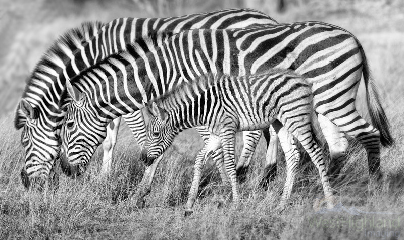 Botswana-20110716-4911-Edit-Edit-2.jpg