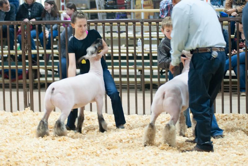 kay_county_showdown_sheep_20191207-52.jpg