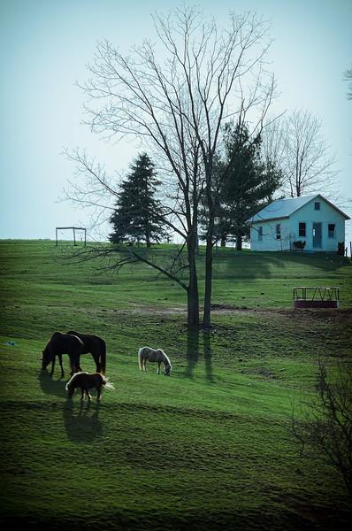 horses - near the projects(p).jpg